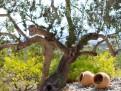 Träd med personlighet.