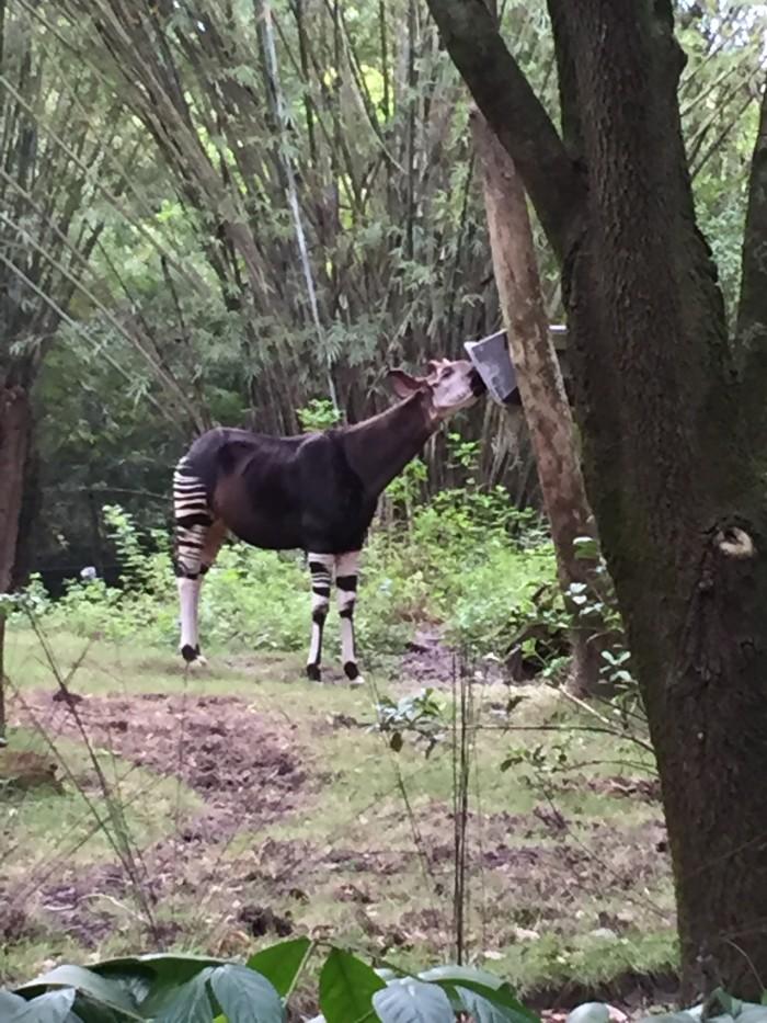 På safarin kommer man ganska nära djuren.